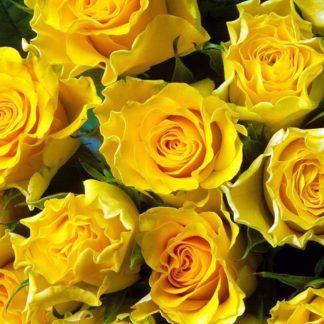 Роза спрей  «Фи  фи »